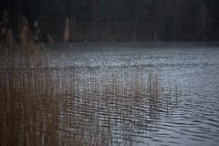 april rain (Mindaugas Buivydas) Tags: blue lake color reed rain forest spring mood moody april lithuania sleet lietuva balislake antaviliaiforest antavilimikas