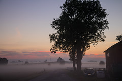 Misty morning (Infomastern) Tags: morning mist fog sunrise landscape dawn countryside soluppgng morgon landskap dimma sdersltt landsbygd gryning