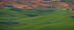 20160501-DGN_2246Palouse-Pano (DuaneNeuf) Tags: green washington rollinghills palouse