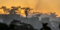 The Golden Silence of Iguacu (*Capture the Moment*) Tags: trees sunset brazil sun mist fog sonnenuntergang brasilien jungle waterfalls sonne bäume goldenhour wetter iguacu landschaften urwald 2016 fozdeiguazu wasserfälle goldenestunde wassernebel sonynex7 sonye18200mmoss
