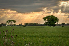 Evening on the marshes. (C.G.Photos) Tags: england landscapes marshes norfolkbroads