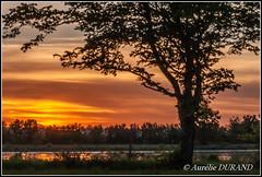 Au pied de mon arbre (Aurlie_D) Tags: sunset tree landscape 300views paysage arbre coucherdesoleil 30faves 30favs flickrsexplore 1750mm ourplanet nikonfrance nikonpassion nikond3000