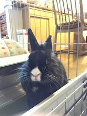 () Tags: pet bunny   rabbitt