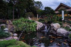The koi pond (Jim Nix / Nomadic Pursuits) Tags: travel family vacation holiday japan orlando epcot florida sony roadtrip disney themepark lightroom colorefexpro nomadicpursuits jimnix sonya7ii