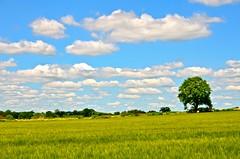 Gnosall skies (Ugborough Exile) Tags: gnosall staffordshire stafford england midlands uk d7000 nikon 2016 flickrsbest nikonpassion treesdiestandingup trees