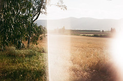 In the fields (inmost_light) Tags: camera sunset summer tree film nature field analog 35mm vintage lomo dreamy analogue
