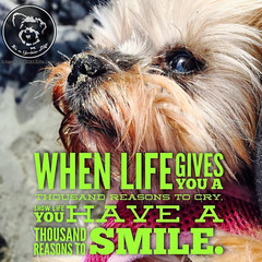 Thanks to my Yorkie, I always have thousand reasons to smile.... (itsayorkielife) Tags: yorkiememe yorkie yorkshireterrier quote