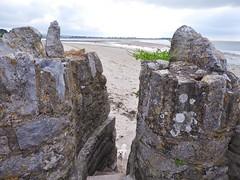 Dungarvan (pisces1946) Tags: dog animal seawall beach sea seashore