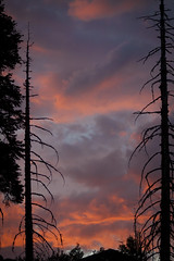 Firelight in the Sky (Life_After_Death - Shannon Renshaw) Tags: california trees sunset orange sun mountain mountains tree nature colors silhouette set pine night forest canon landscape dead outdoors fire photography eos evening stanislaus view purple natural outdoor horizon nevada sierra national cedar outline dslr canondslr canoneos fiery dormant sierranevadamountains stanislausnationalforest lifeafterdeath wane 50d shannonday canoneos50d eosdslr canoneos50ddslr lifeafterdeathstudios lifeafterdeathphotography shannondayphotography shannondaylifeafterdeath lifeafterdeathstudiosartandphotography shannondayartandphotography