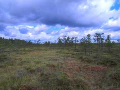 Valkiaissaarenrahka swamp (J Saari) Tags: finland ex1 swamp kuhankuono valkiaissaarenrahka haukkavuorenreitti trekking hdr handheldhdr luminance tonemapped summer naturetrail pyty kurjenrahka nature nationalpark