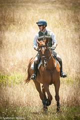 Chatworths Stud (Sommer Wilson) Tags: horses horse michael nathalie pollard warmblood cantering warmbloods troting
