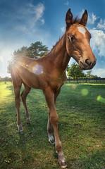 Georgie (Tracy Munson Photography) Tags: sky horses animals closeup clouds evening farm wideangle lensflare chestnut sunburst sunrays racehorse quarterhorse sunflare foal horsefarm