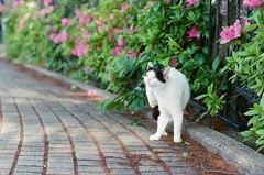 4342016/4/30 (Natsuki_y) Tags: cats flower film cat 50mm tokyo nikon fujifilm f2 straycat filmphotography flowerphotography