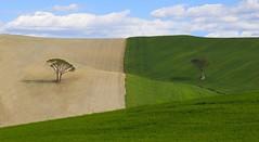 Tuscany countryside (Gabrisan75) Tags: alberi canon country campagna tuscany fields usm toscana albero livorno 70200 6d campi