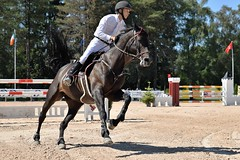 DSC_1041 (2) (ploufjf_64) Tags: paus show jumping chevaux pau 2016