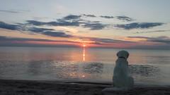 Ditte enjoying a beautiful summer evening by the sea (Ingrid0804) Tags: goldenretriever sunset summer beach sea sky goldenretrieverditte happiness bliss