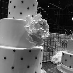 cake (molybdena) Tags: brooklyn retail commerce atlanticave dessert monochrome fooddrink newyorkcity newyork bakery bw cake nyc blackandwhite drink food iwalkatnight