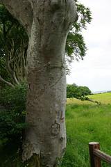 DSC05118 (raehyunie) Tags: dark hedges ireland