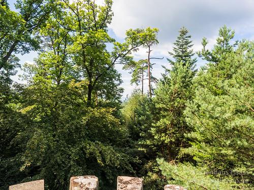 Wasenkopf - Naturpark Nordvogesen