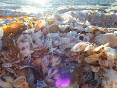 Sunset Seashells (jo.elphick) Tags: seashells beach sunset seaweed australia murramarang nsw