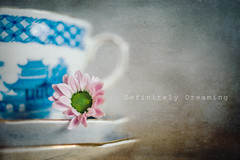 Teacup & Tiny Flower (DefinitelyDreaming) Tags: flower floral tinyflower teacup chinacup stilllife texture textures simple sonya99