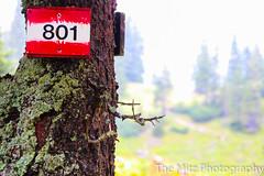 IMG_3399 (The Mitz Photography) Tags: gams grünersee hochschwab mariazell maryclan murmerl mädels nebel pilgern sommer steinbock wandern