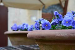 Primavera a Pienza (michele.palombi) Tags: pienza toscana primavera