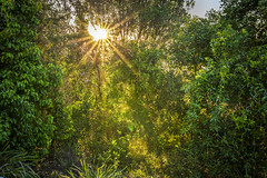 The suns rays (Tam Church) Tags: travel trees sun colour tree travelling green art beautiful forest canon photography bay ray colours bright rays sunrays byron tamron shining forests byronbay 6d 2470 tamron2470 canon6d tamchurch