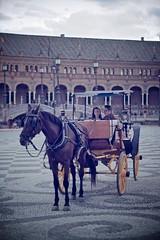 RoMaNtIc StRoLL (jarufocontreras@gmail.com) Tags: plaza espaa de caballo sevilla pareja paseo coche novios