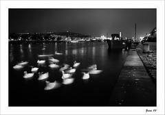IMG_5358-Edit-Edit-3-Edit-Edit (zaom80) Tags: longexposure blackandwhite boat prague monochromatic swans nightphoto vltava longtime vltavariver eos450d sigma1770