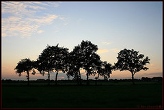 A shape of trees (shumpei_sano_exp2) Tags: sunset sky nature landscape aplusphoto platinumheartaward