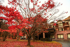 () Tags: travel red nature yellow japan canon hotel maple      oirase     ef24105mmf4lis 1dx