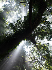 Light Rays 2 (DaveKav) Tags: camping trees light france silhouette smoke olympus rays campsite coldibardin