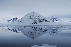 Reflections in grey (dracophylla) Tags: svalbard arctic