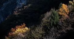"""quando arriva ... la luce ("""" paolo ammannati """") Tags: autumn colors raw trento 1001nights autunno colori trentino tenno lagoditenno paoloammannati"""