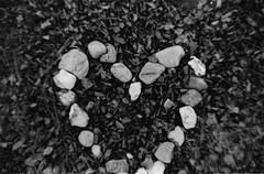 Missed the Shot (Heibergl) Tags: ocean sea white black cold fall love film analog photography waves walk story shortstory brokenheart breakup reporting heartbroken sønderborg washedaway