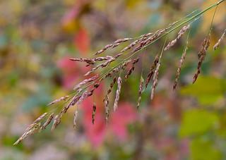 Autumn path foliage-a-1
