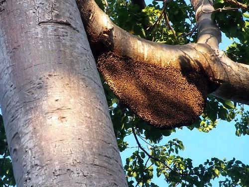 #7626 bee's nest (蜂の巣)