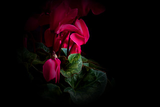 see more in my album 'blumen/frowers'