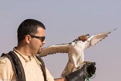 8Q2A1115_DxO (maskirovka77) Tags: dubai desert hunting beak raptor owl falcon hood sharjah unitedarabemirates falcons raptors avian barnowl hunt birdsofprey lure birdofprey falconry talons natureconservancy stooping falconeer peregrinefalcon gyrfalcon pergrine falconexperience alshuwaib arabiandeserteagleowl royalshaheen clawsarabiandeserteagleowldubainatureconservancypergrineraptorsroyalshaheenbirdofpreybirdsofpreyfalconfalconexperiencefalconsowlraptoralshuwaibsharjahunitedarabemirates