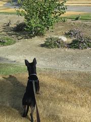 November 22, 2014 (19) (gaymay) Tags: california gay love happy desert walk palmsprings dogwalk triad ozmo