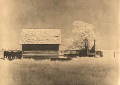 450 - South of Town 2 - Lith Print (Brad Renken) Tags: blackandwhite 120 film rollei nebraska cattle pentax farm ne pasture neb infrared lith 6x7 fiber agfa bertrand smc phelps nebr r72 microdol arista portriga