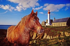 Pointe St Mathieu. (Marc Le Port) Tags: horse lighthouse france monument nature st cheval bretagne capture litoral phare couleur mathieu chevaux finistere abaye