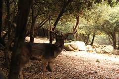 Nel Parco Donnortei a Fonni (SilviasTrips) Tags: sardegna barbagia donnortei fonni sardolicesimo