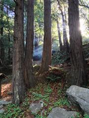 Limekiln State Park, California