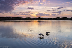 A Place To Rest II. (dasanes77) Tags: pink sky orange sun lake seascape nature water valencia clouds sunrise wow reflections landscape dawn peace shadows wildlife dunes tripod naturallight flamingos calm cloudscape canonef24105mmf4lisusm canoneos6d albuferaofvalencia neutralgraduated3stepsfilter