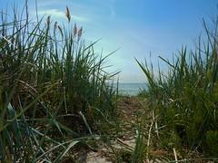Habo Ljung strand - Lomma - spring 2016 (Flicker Classic Person) Tags: beach strand skne spring sweden nudist naturist sverige safe fkk 2016 lomma haboljung