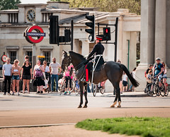 Member of the Household Cavalry, Mounted Regiment, waiting for the lights to change, London (godrick) Tags: uk england horse london soldier mounted hydeparkcorner regiment gbr householdcavalry