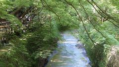 Greenery / Kyoto Kitano-tenmangu Odoi Mound (maco-nonchR) Tags: longexposure green river kyoto  manualexposure odoi allmanual   kamiyagawa