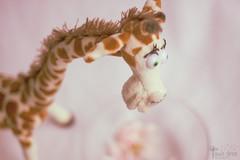 Mi Jirafa Cleo  :) (Xielosmz) Tags: recuerdo amarillo naranja juguete peluche jirafa